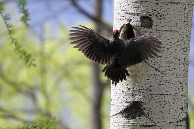 Oiseaux mythiques des Pyrénées